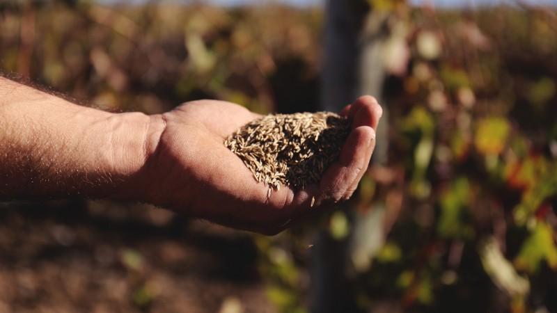 plantar sementeiras