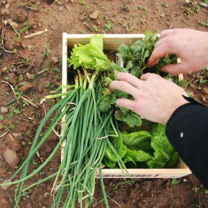 caixa vegetais