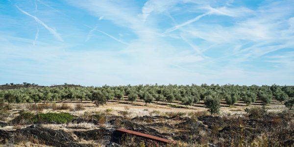olivais herdade do esporão